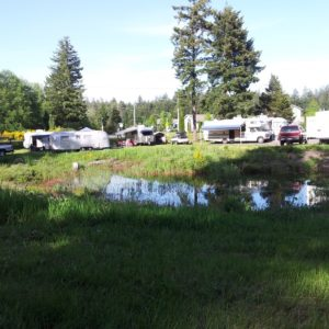 Camping at Bluegrass from the Forest